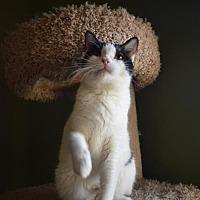 Adopt A Pet :: Valerie - Phoenix, AZ