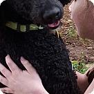 Adopt A Pet :: Brittney