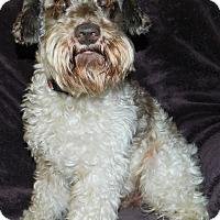 Adopt A Pet :: Atreyo - Umatilla, FL
