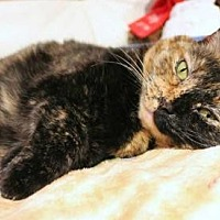 Adopt A Pet :: Anisette - East Brunswick, NJ