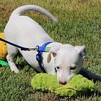 Adopt A Pet :: Annie - Winters, CA