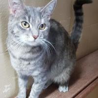 Adopt A Pet :: Ash - Moncton, NB