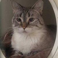Adopt A Pet :: Willow - Hamilton, ON