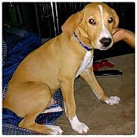 Adopt A Pet :: Loki - Royal Palm Beach, FL