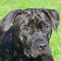 Adopt A Pet :: Kali - Englewood, FL