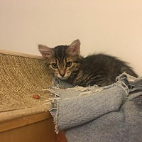 Adopt A Pet :: Bluebell - Davis, CA