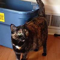 Adopt A Pet :: Jolene* - Walnut Creek, CA