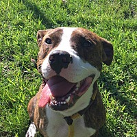 Adopt A Pet :: Limbo - Villa Park, IL