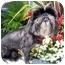 Photo 1 - Lhasa Apso Dog for adoption in Los Angeles, California - RIVA