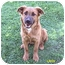 Photo 4 - German Shepherd Dog/Border Collie Mix Dog for adoption in Bellflower, California - Libby