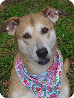 Shepherd (Unknown Type)/Hound (Unknown Type) Mix Dog for adoption in Peachtree City, Georgia - Honey Dew