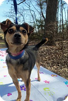 Terrier (Unknown Type, Medium) Mix Dog for adoption in Waldorf, Maryland - Cocao #358