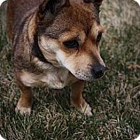 Adopt A Pet :: Trix - Broomfield, CO