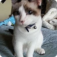 Adopt A Pet :: Sweet Nell - Dallas, TX