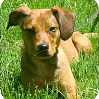 Adopt A Pet :: Gwynnie - Jacksonville, FL