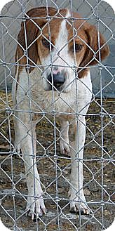 Hound (Unknown Type) Mix Dog for adoption in New Plymouth, Idaho - HUNTER