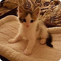 Adopt A Pet :: Bobbie - San Fernando Valley, CA