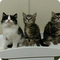 Adopt A Pet :: Two boys and a girl - New Egypt, NJ