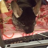 Adopt A Pet :: Rocky - Patchogue, NY