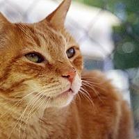 Adopt A Pet :: Twizzler - Tucson, AZ