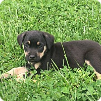 Adopt A Pet :: Jed - Russellville, KY