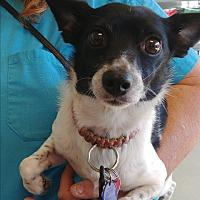 Adopt A Pet :: Dobie - Ogden, UT