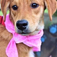 Adopt A Pet :: Praline - Batesville, AR