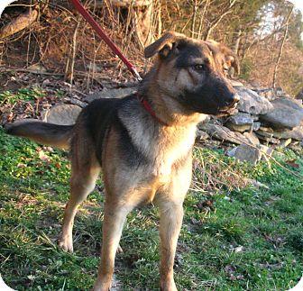 German Shepherd Dog Mix Dog for adoption in Louisville, Kentucky - Eris