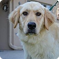 Adopt A Pet :: Sophia - Foster, RI