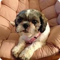 Adopt A Pet :: Pepper - Hilliard, OH
