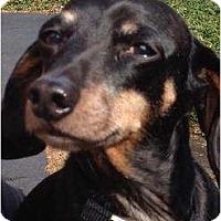Adopt A Pet :: Louie - Killingworth, CT