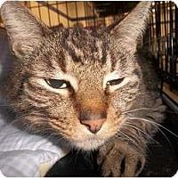 Adopt A Pet :: Delaney - Riverside, RI