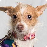 Adopt A Pet :: Mimi - Minneapolis, MN