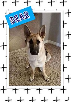 German Shepherd Dog Mix Puppy for adoption in Edwards AFB, California - Bear