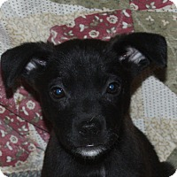 Adopt A Pet :: Niles - in Maine - kennebunkport, ME
