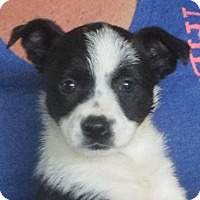 Adopt A Pet :: Opal - Greenville, RI