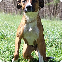 Adopt A Pet :: Cassie - Waldorf, MD