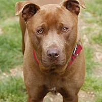 Adopt A Pet :: Roscoe - Camden, DE