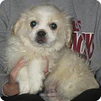 Adopt A Pet :: Edison - Greenville, RI