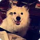 Adopt A Pet :: Damien