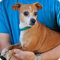 Adopt A Pet :: Parker - Las Vegas, NV