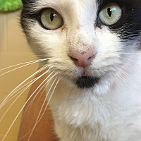Adopt A Pet :: Emma - Chula Vista, CA