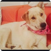 Adopt A Pet :: WENDY *COURTESY POST* - Christiana, TN