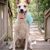 Basenji Mix Dog for adoption in Clifton, Texas - Stella