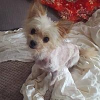 Adopt A Pet :: Cosmo - Houston, TX