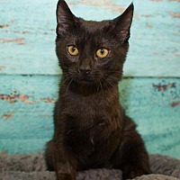 Adopt A Pet :: Peyton - Alpharetta, GA