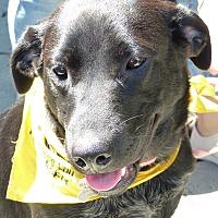 Adopt A Pet :: Audrey and Daphne - richmond, VA