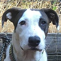 Adopt A Pet :: Mr Dante - Rogue River, OR