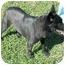 Photo 4 - Australian Cattle Dog/Labrador Retriever Mix Dog for adoption in Cincinnati, Ohio - Cole