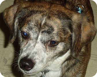 Terrier (Unknown Type, Small) Mix Dog for adoption in WYTHEVILLE, Virginia - Princess